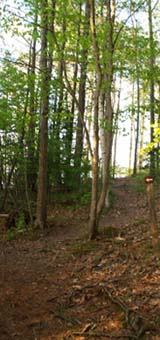 Trail with a small arrow sign pointing to a spur (photo by Webmaster)