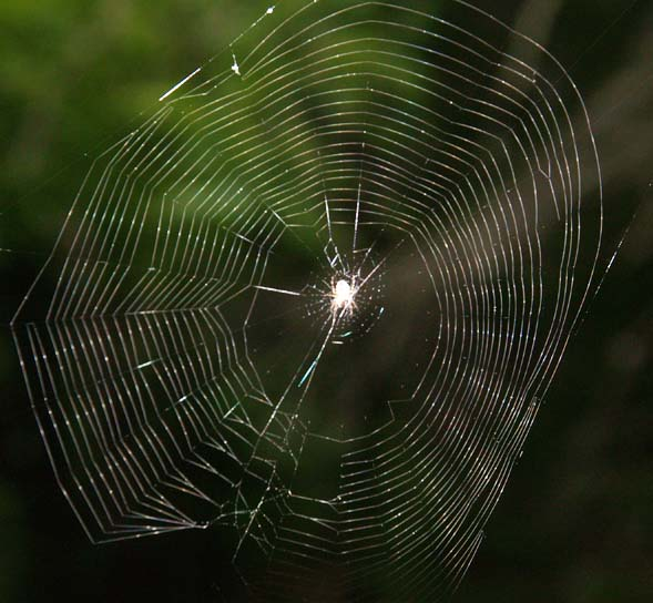 Spider in its web (photo by Webmaster)