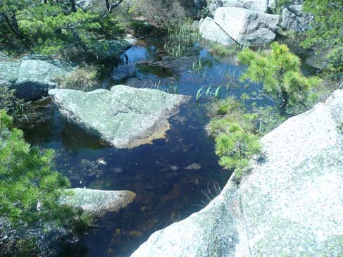 Tiny pond near the summit of Champlain Mtn. (photo by Chip Lary)