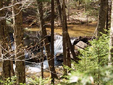 Cascade on Birch Island Brook (photo by Webmaster)