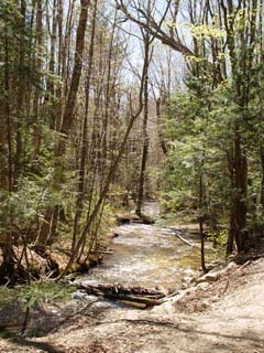 Brook along Lincoln Woods Trail (photo by Webmaster)