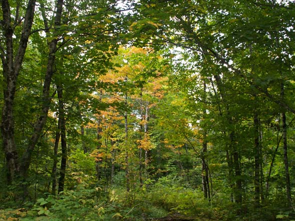 Some early fall color along Slippery Brook Trail (photo by Webmaster)