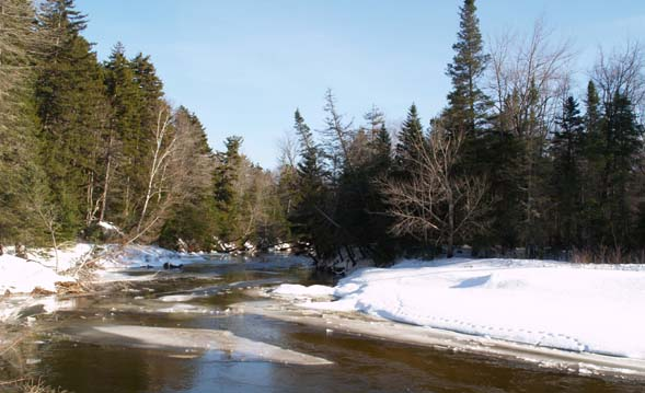 Swift River and animal tracks (photo by Webmaster)