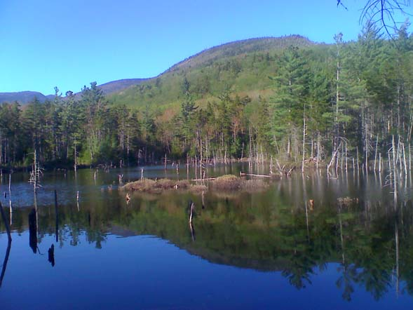 Beaver Pond (photo by Bill Mahony)