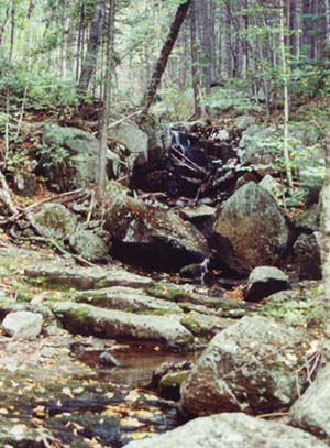 Hale Brook (photo by Webmaster)