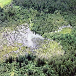 Hurlbert Swamp from above