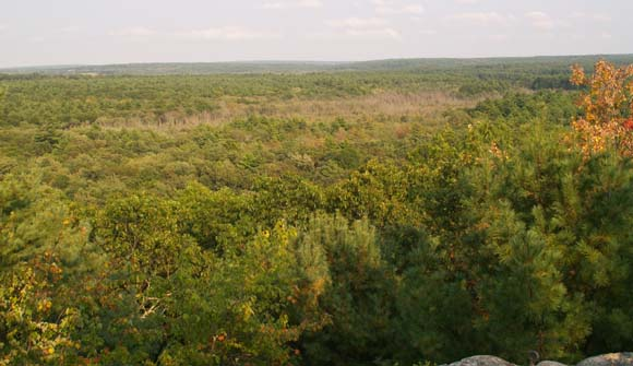 Forested expanse viewed from Mt. Misery's summit ledge (photo by Webmaster)