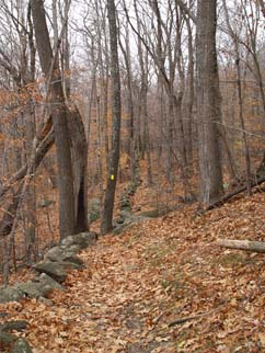 Long stone wall bordering Parker Trail (photo by Webmaster)