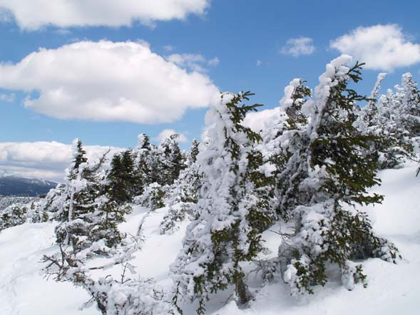 Snow splattered on the north-facing sides of scrub on Mount Pierce (photo by Webmaster)