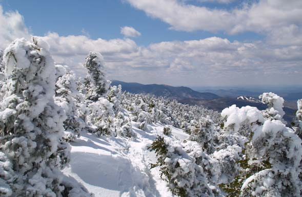 View of scrub-covered Mt. Pierce from Crawford Path with mountains and Bretton Woods downhill ski area in the distance (photo by Webmaster)