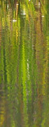 Wetland grasses reflected in the water (photo by Webmaster)