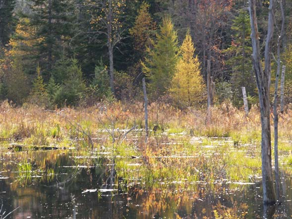Wetlands along the Presidential Range Rail Trail (photo by Webmaster)