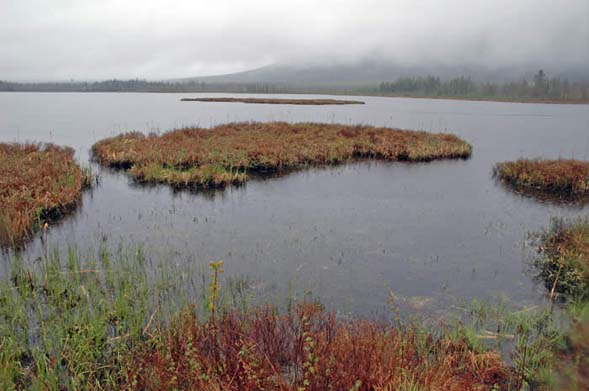 Floating peat islands on Cherry Pond (photo by Ben Kimball for NH Natural Heritage Bureau)