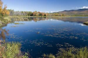 Little Cherry Pond in late September (photo by Ben Kimball for NH Natural Heritage Bureau)