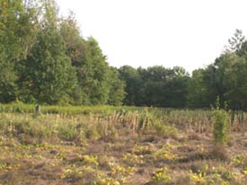 Meadow near start of loops (photo by Webmaster)