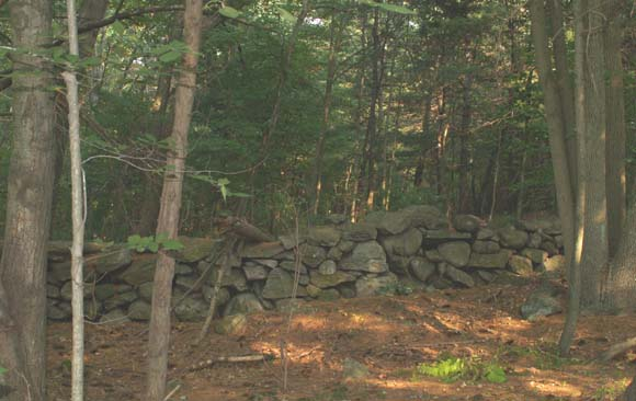 Stone wall along the Orange Trail (photo by Webmaster)