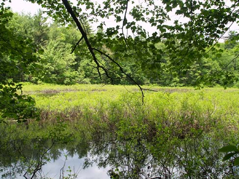 Shrub-filled June Pond (photo by Webmaster)