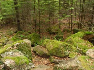 Moss-covered boulders between Parkman Mountain and Gilmore Peak (photo by Webmaster)