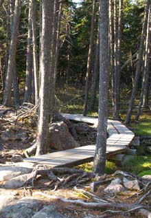 Boardwalk on Ship Harbor Trail (photo by Webmaster)