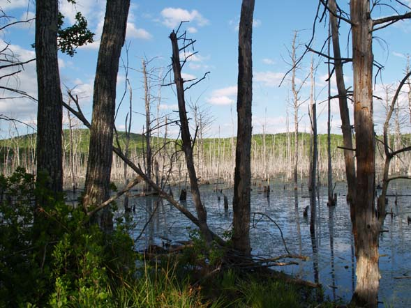 Beaver wetlands (photo by Webmaster)