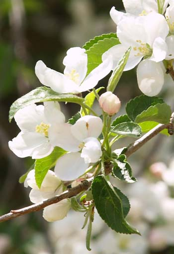 Close-up of a flowering shrub along the gravel road (photo by Webmaster)