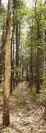 Woods trail at the base of the meadows (photo by Webmaster)