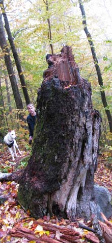 Dasher and Matt peeking around a huge stump at the B18 crash site (photo by Karl Searl)