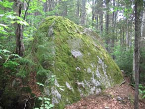 Moss-covered boulder (photo by Dennis Marchand)