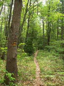 Midstate Trail between Barre and Princeton (photo by Webmaster)