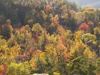 View of foliage from Trail #2 (photo by Webmaster)
